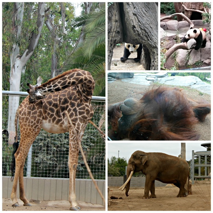 San Diego Zoo collage